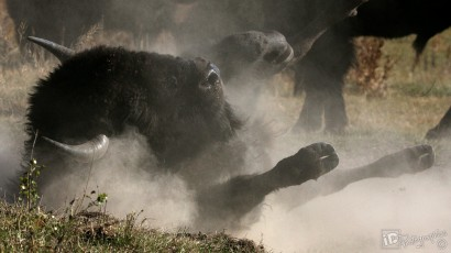 iDPhotoGraphics-wildlife-04
